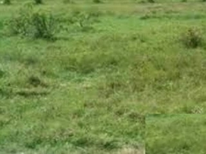 Distress Sales: 2 Plots Of Land For Sale @ Shell Location, Port Harcourt, Rivers State. #2.5million Naira Per Plot Mixed Land for Sale Port Harcourt Rivers Vetra  Property