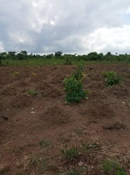 Dry Land For Sale Mixed Land for Sale Asaba Delta Vetra  Property