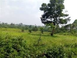 Cheap 80acres Of Land In Ogun Papalantoro , Ewekoro 80  of Land for Sale Ewekoro Ogun Vetra  Property
