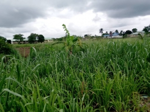 Plots Of Land In Benin City Available For Sale  Mixed Land for Sale Oredo Edo Vetra  Property