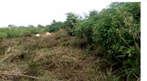 Plot Of Land For Individual And Commercial Use For Sale Mixed Land for Sale Ukpoba Edo Vetra  Property